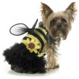 courtesy of : http://www.buycostumes.com Daisy Bee