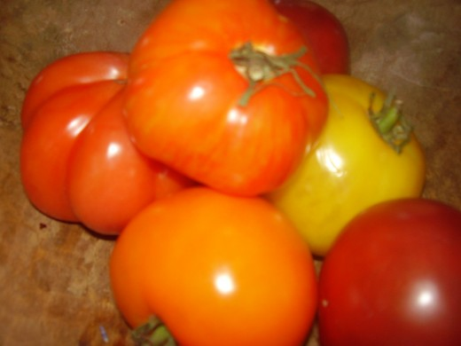 A variety of heirlooms at our house.