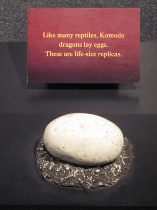 Replica of a Komodo egg (Woodland Park Zoo)