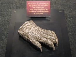 Claw of  a Komodo Dragon