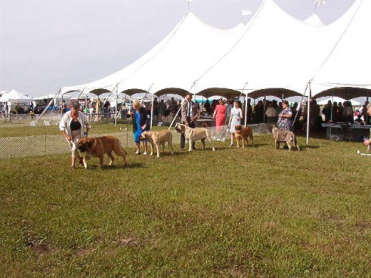 A group of us working hard at a dog show -- see me?