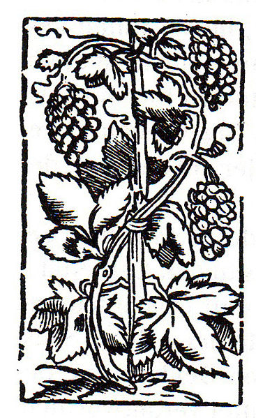 Many types of vines can add cooling shade and moisture. (Photos this page public domain)