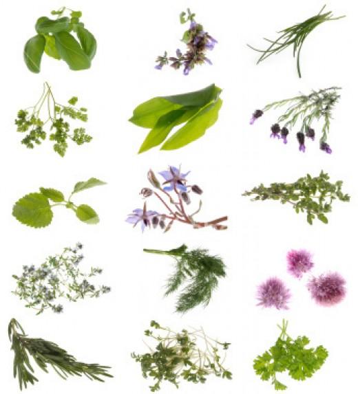 A variety of medicinal plants