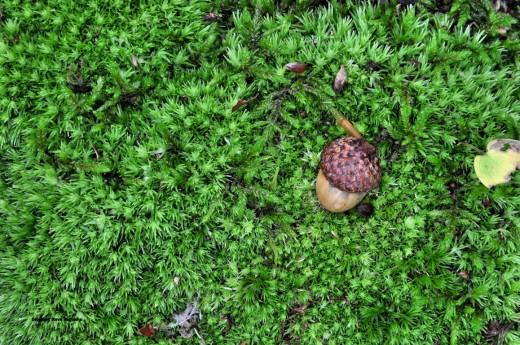 Moisture even makes the moss more vivid.