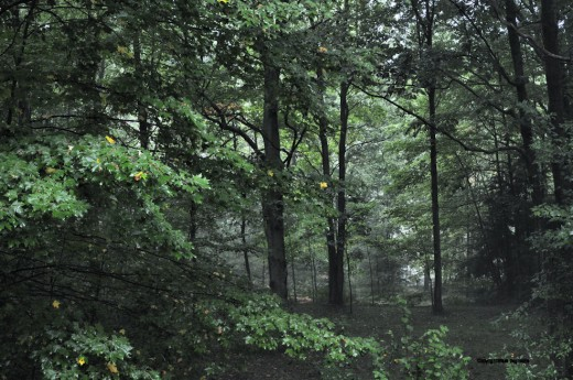 A light fog muted the backyard this evening
