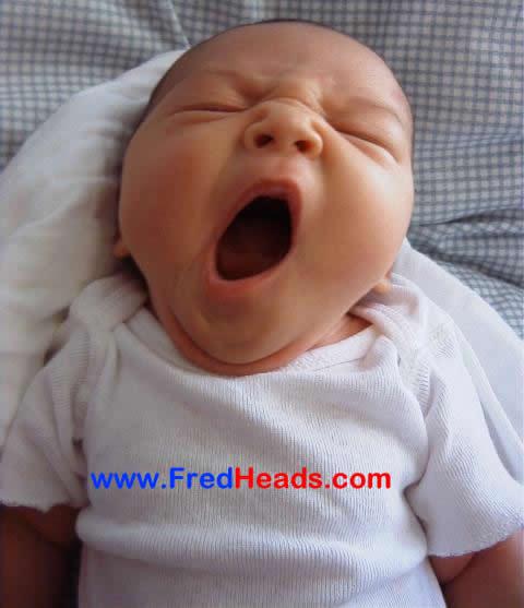 Yawning. Image Source:http://www.fredheads.com/images/yawning.jpg