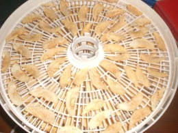 Apples drying in the dehydrator.