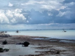 Shot Taken Off Of Mangrove Cay, Where The Tour Stops For Lunch
