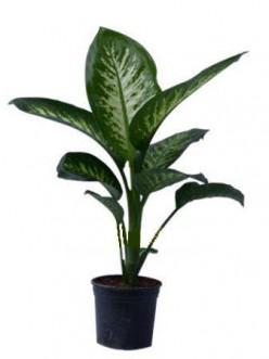 "WARNING: This Common ""House Plant"" Can Kill!"