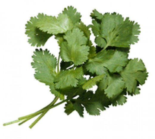 Fresh cilantro - The final touch to a wonderful curry dish!