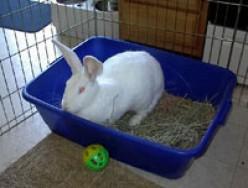 Bunnies and Apartment Life