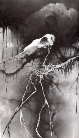 """""""Horse Skeleton""""-Stephen Gammell"""