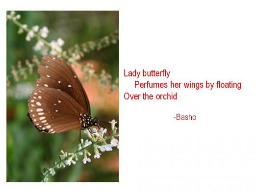Orchid haiku poem