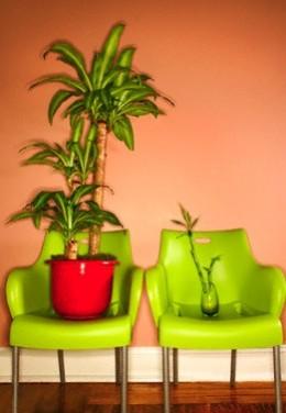 Dracaena & Bamboo