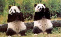 Should Panda's Live?