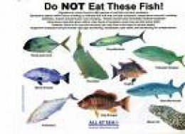 Poster put out by (I think) Panama Yacht Club.  Not all these fish are always dangerous      by tell-tales.info
