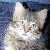 PattiM profile image