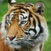 WilyTiger profile image
