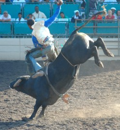 Bull Riding: Tips for Scoring Points, with Bonus Video