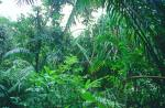 Glorious profusion of a tropical rainforest