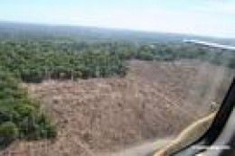 Clearcutting eats into the Amazon rainforest in Brazil