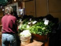 Urban Sustainable Living Tips