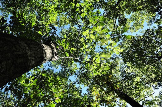 The canopy is still green, but just maybe more blue sky can be seen through the leaves.