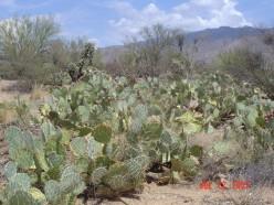 Arizona Desert...2:00 P.M.