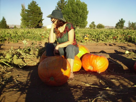 Trying to decide which pumpkin to pick in a field of pumpkins