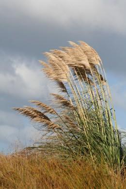Toi toi in the dunes