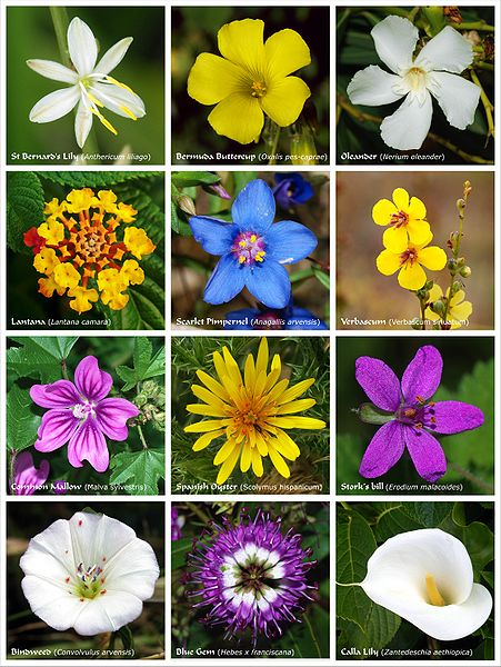 A flower is a bloom or blossom found in a flowering plant. Here in this photo are examples of flowers.