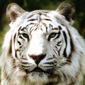 Wildlifelover profile image