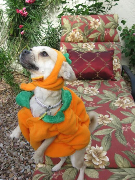 Chika in her pumpkin costume