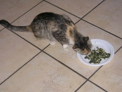 Camellini Luca's cat loved Popeye brand canned spinach. She can have my portion.