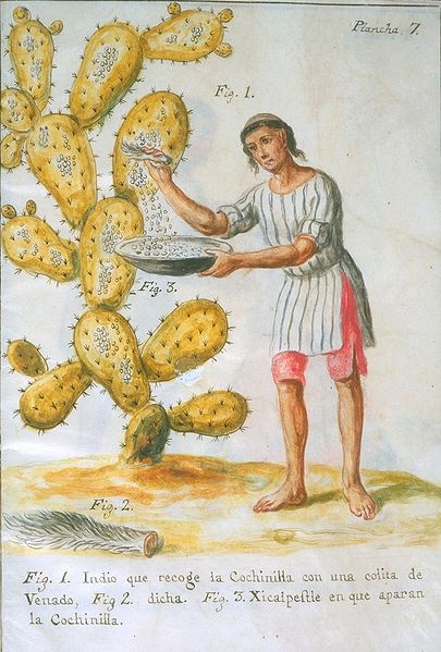 """Indian Collecting Cochineal with a Deer Tail"" by Jos Antonio de Alzate y Ramrez (1777)."