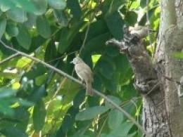 Bird Photos taken during Cinnamon Lodge Bird and Butterfly trail