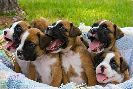 """Flickr Image: MikQuattro """"Something about Puppies"""""""