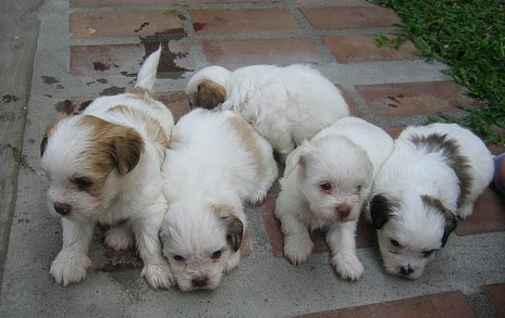 """Flickr image: whipsmart; """"the lazy bunch"""""""