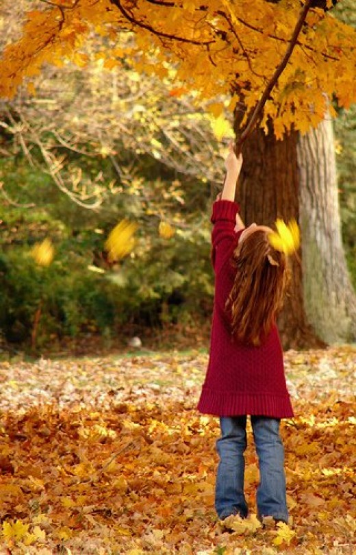 Your kids will enjoy going on a leaf hunt. Photo by surplusparts on Flikr