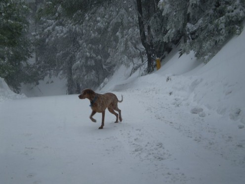 Lucky dog running in the snow.  Yes, it does snow in Southern California, in the mountains that is!