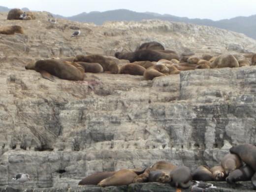 Isla de los Lobos (Sea Wolves Island)