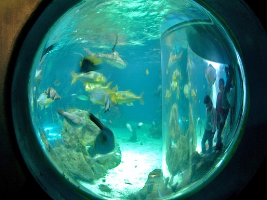 Holiday Activities for Children in Newquay: Newquay: Sealife Centre, Aquarium