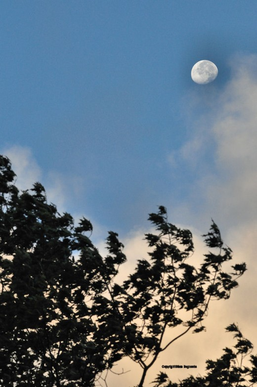 The setting moon peeked out between wind-driven clouds above the treeline this morning.