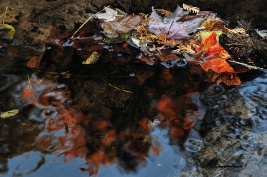 Colors swirl in the creek from leaves it carries and scenes it reflects