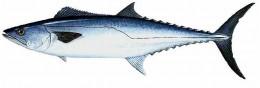 www.fish4fun.com