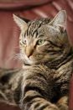 Cat Breeds Guide