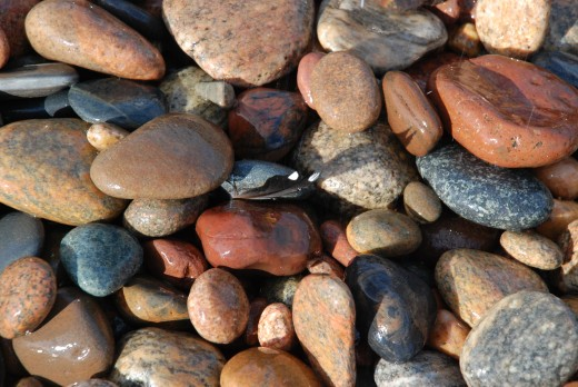 The stones on the beach of Lake Superior at Whitefish Point contain a loon feather.