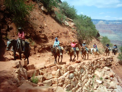 Grand Canyon Limousine~on Bright Angel Trail