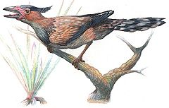 Sinornis, an enantiornithine. Enantiornithes were an order of flighted birds that lived during the Jurassic and Cretaceous in the Age of Dinosaurs.