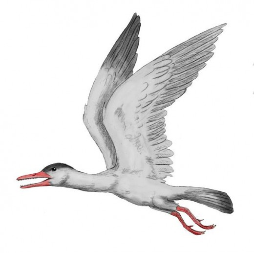 Ichthyornis, a toothed sea-bird from Cretaceous North America